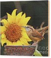 Carolina Wren And Sunflowers Wood Print