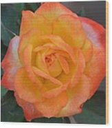 Caroty Splendor - Rose Wood Print