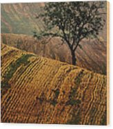 Carpet Fields Of Moravia Wood Print
