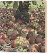 Carpet Of Apples Wood Print