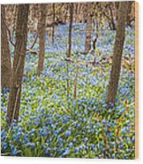 Carpet Of Blue Flowers In Spring Forest Wood Print by Elena Elisseeva