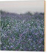 Carpinteria California Wildflowers Wood Print