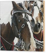 Carriage Horse - 2 Wood Print