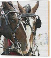 Carriage Horse - 3 Wood Print