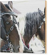 Carriage Horse - 5 Wood Print