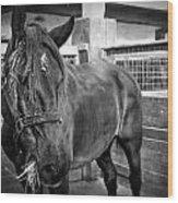 Carriage Horse Wood Print