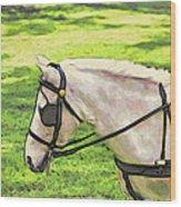 Carriage Pony Wood Print