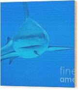 Carribean Reef Shark Seeks Dinner Wood Print