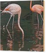 Cartoon - A Flamingo With Its Head Under Water In The Jurong Bird Park Wood Print