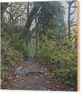Cascade Forest Path Wood Print