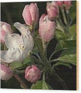 Cascade Of Apple Blossoms Wood Print