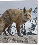 Cascade Red Fox 1 Wood Print