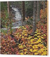 Cascade Creek  Autumn Wood Print