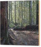 Cascades Forest Path Wood Print