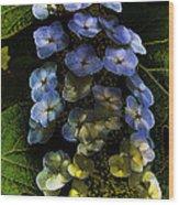 Cascading Flower Wood Print