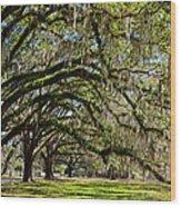Cascading Oaks Wood Print