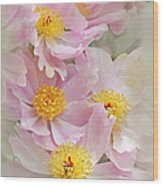 Cascading Pink Peony Flowers Wood Print