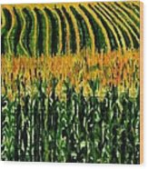 Cash Crop Corn Wood Print