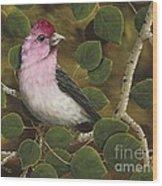Cassins Finch Wood Print