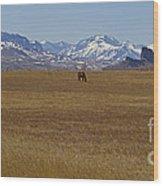 Castle Rock Horses   #8515 Wood Print