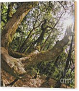 Castle Rock State Park Branch To The Sun Wood Print