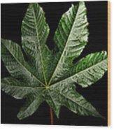 Castor Bean Leaf Wood Print