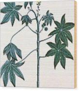 Castor Oil Plant Wood Print