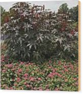 Castor Oil Plant Ricinus Communis Wood Print