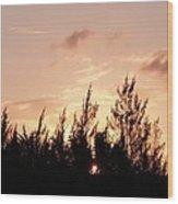 Casurina Sunset Wood Print