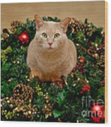 Cat And Christmas Wreath Wood Print