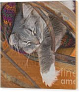 Cat Asleep In A Wooden Rocking Chair Wood Print