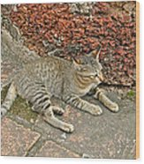 Cat At Wat Mahathat In 13th Century Sukhothai Historical Park-th Wood Print