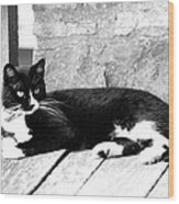 Cat Black And White Wood Print