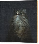 Cat By Rainy Window Wood Print