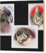 Cat Family Wood Print