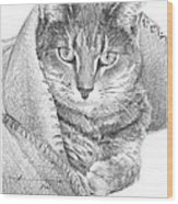 Cat In A Blanket Pencil Portrait  Wood Print