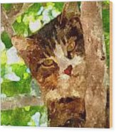 Cat In A Tree  Wood Print