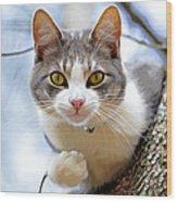 Cat In A Tree Wood Print