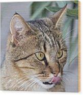 Cat In Athens Wood Print