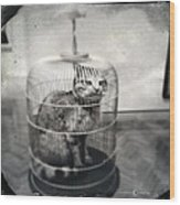 Cat In Cage Wood Print
