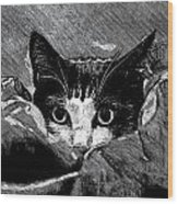 Cat In Hiding Wood Print