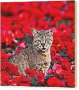 Cat In Red Wood Print