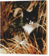 Cat In The Golden Grass Wood Print