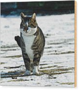 Cat In The Snow Wood Print
