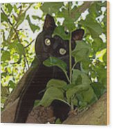 Cat In Tree Wood Print