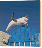 Cat Jumping A Gate Wood Print