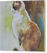White And Brown Cat Wood Print