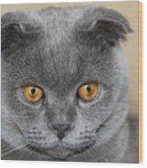 Cat Martin Wood Print