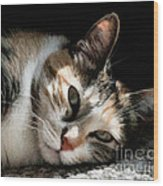Cat Napping In The Sun By David Perry Wood Print