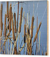 Cat Nine Tails Wood Print